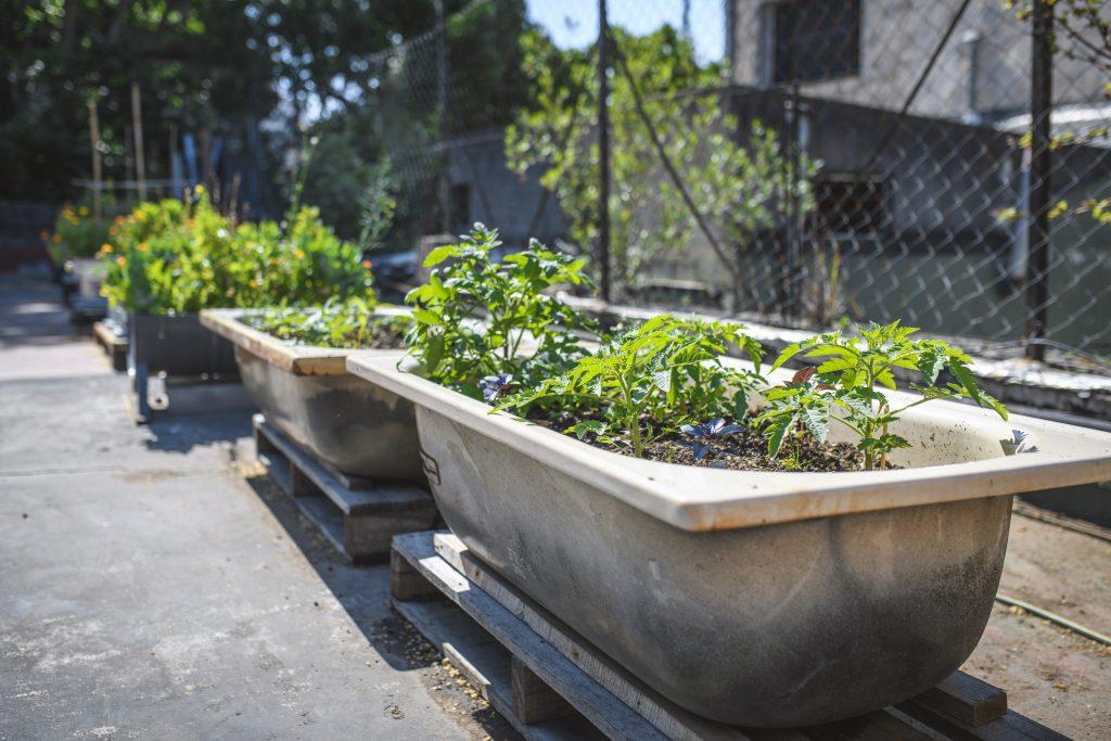 Nahaufnahme von Gartenpflanzgefäßen auf dem Dach aus recycelbaren Materialien, die auf Paletten im sonnigen Buenos Aires sitzen.